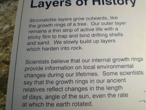 Stomatolite formation