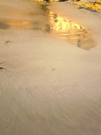 Wet Sand Reflection 2